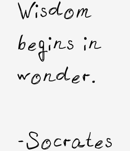wisdom begins in wonder take away bon goesta
